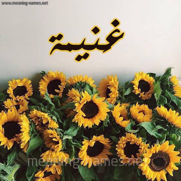 شكل 17 صوره دوار الشمس للإسم بخط رقعة صورة اسم غَنيمة GHANIMH