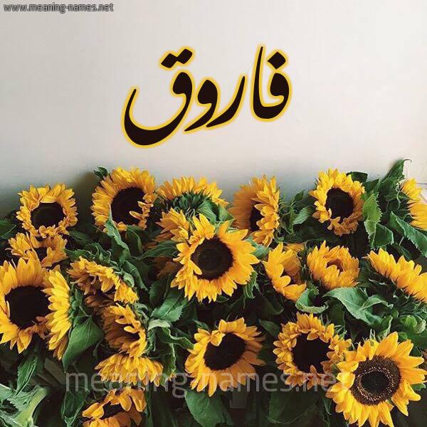 صورة اسم فاروق Farok شكل 17 صوره دوار الشمس للإسم بخط رقعة
