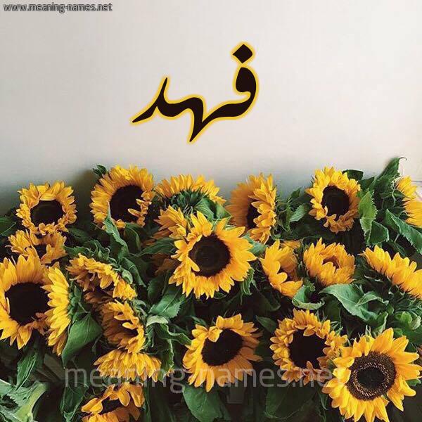 صورة اسم فهد Fahd شكل 17 صوره دوار الشمس للإسم بخط رقعة