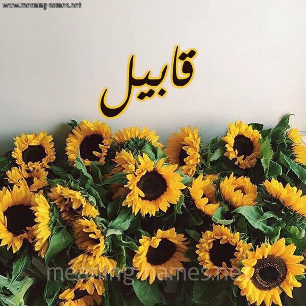 صورة اسم قابيل Qabil شكل 17 صوره دوار الشمس للإسم بخط رقعة