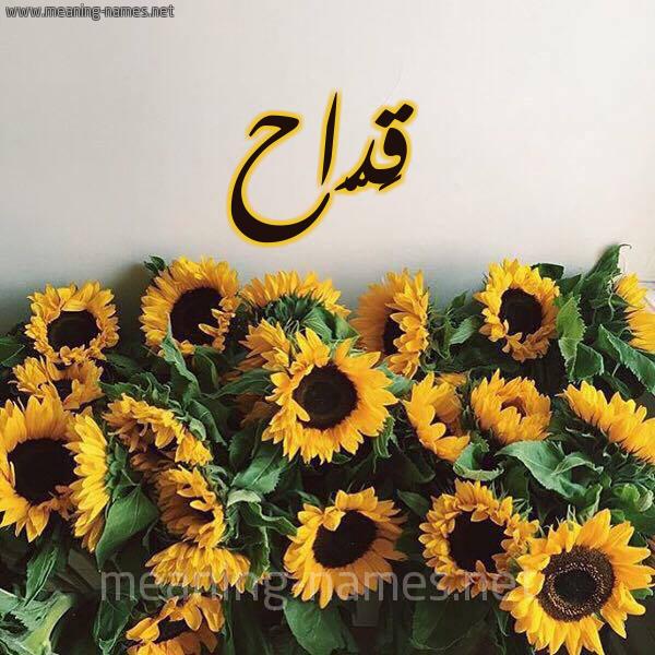 صورة اسم قَدّاح QADAH شكل 17 صوره دوار الشمس للإسم بخط رقعة