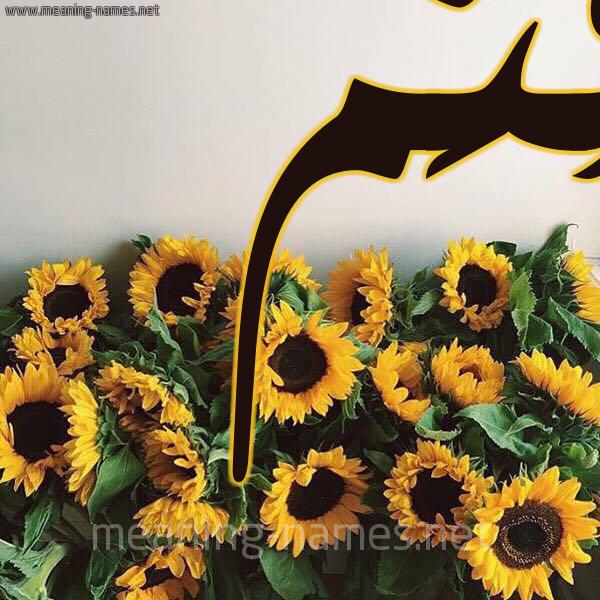 صورة اسم قُثَم QOTHAM شكل 17 صوره دوار الشمس للإسم بخط رقعة