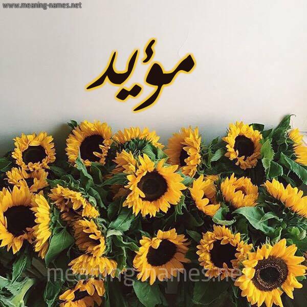 صورة اسم مؤيد Moaid شكل 17 صوره دوار الشمس للإسم بخط رقعة