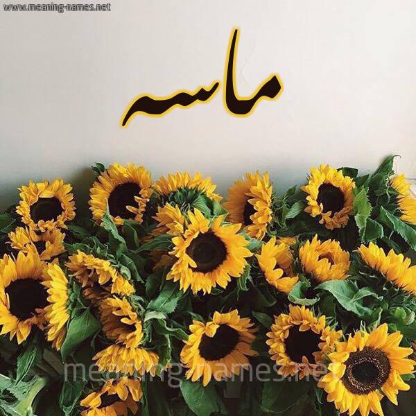 صورة اسم ماسه Masa شكل 17 صوره دوار الشمس للإسم بخط رقعة