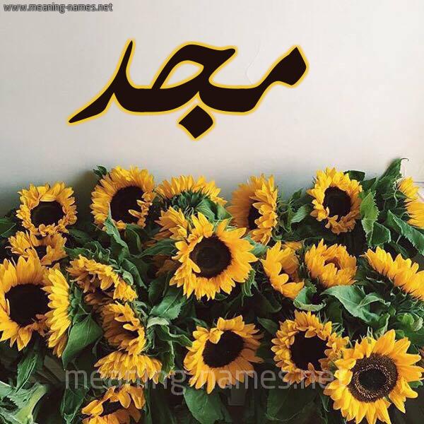 صورة اسم مجد Magd شكل 17 صوره دوار الشمس للإسم بخط رقعة