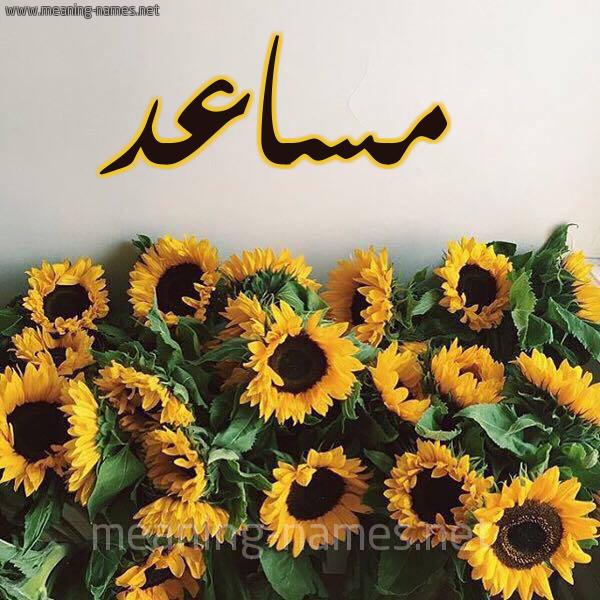 صورة اسم مساعد Mosad شكل 17 صوره دوار الشمس للإسم بخط رقعة