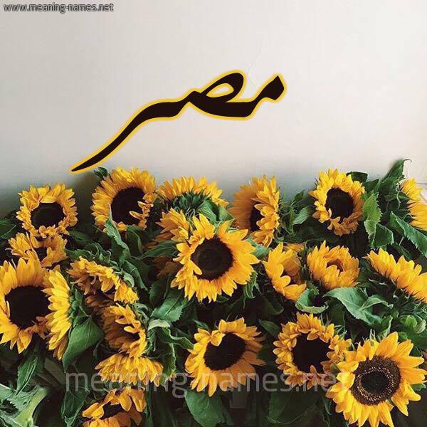 صورة اسم مصر Misr - Egypt شكل 17 صوره دوار الشمس للإسم بخط رقعة