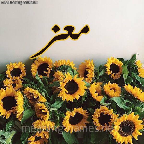 صورة اسم معز Maz شكل 17 صوره دوار الشمس للإسم بخط رقعة