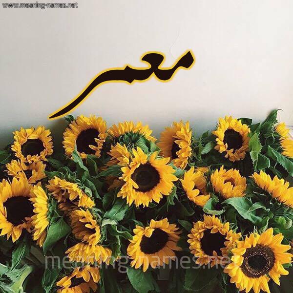 صورة اسم معمر Moamr شكل 17 صوره دوار الشمس للإسم بخط رقعة