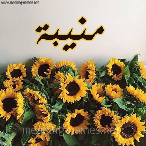صورة اسم منيبة Mnyba شكل 17 صوره دوار الشمس للإسم بخط رقعة