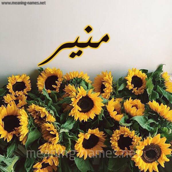 صورة اسم منير Monir شكل 17 صوره دوار الشمس للإسم بخط رقعة