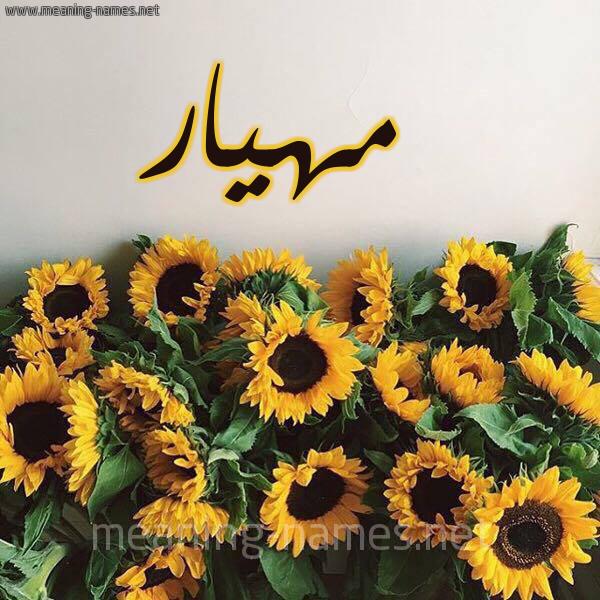 صورة اسم مهيار Mhiar شكل 17 صوره دوار الشمس للإسم بخط رقعة