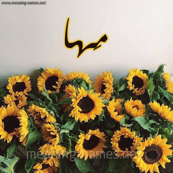 صورة اسم مَها Maha شكل 17 صوره دوار الشمس للإسم بخط رقعة