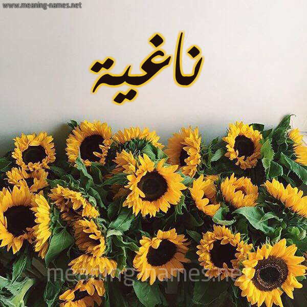 صورة اسم ناغية Naghyh شكل 17 صوره دوار الشمس للإسم بخط رقعة