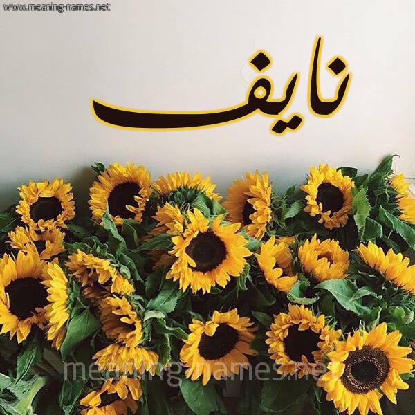 صورة اسم نايف Nayf شكل 17 صوره دوار الشمس للإسم بخط رقعة
