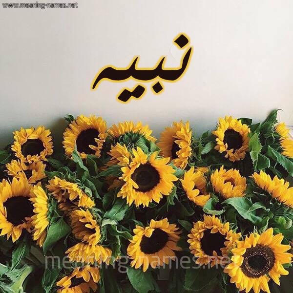 صورة اسم نبيه Nbyh. شكل 17 صوره دوار الشمس للإسم بخط رقعة