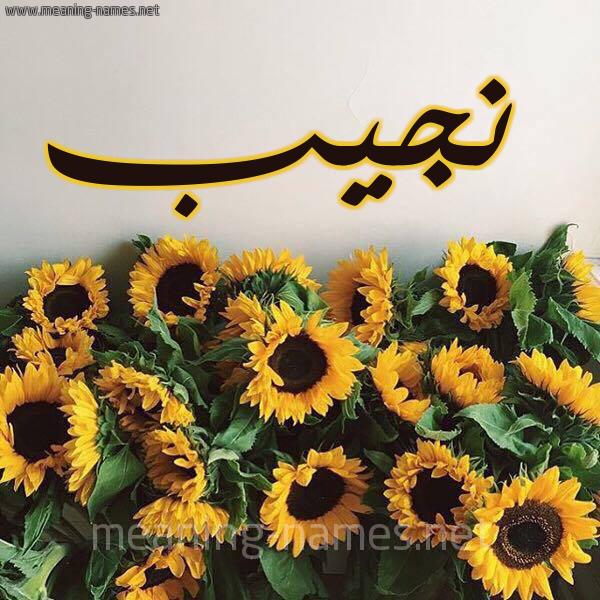 صورة اسم نجيب Nagib شكل 17 صوره دوار الشمس للإسم بخط رقعة
