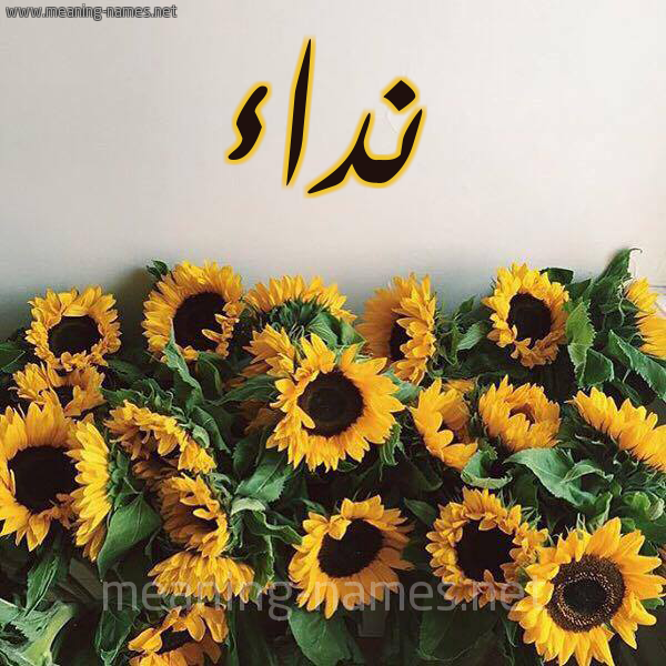 صورة اسم نداء Nedaa شكل 17 صوره دوار الشمس للإسم بخط رقعة