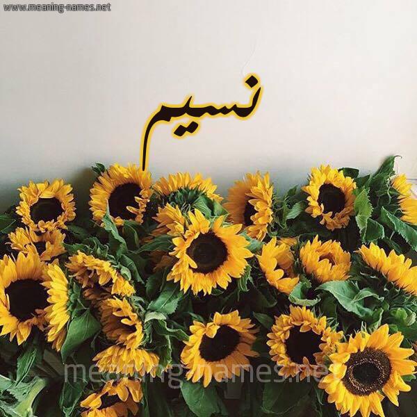 صورة اسم نسيم Nsym شكل 17 صوره دوار الشمس للإسم بخط رقعة