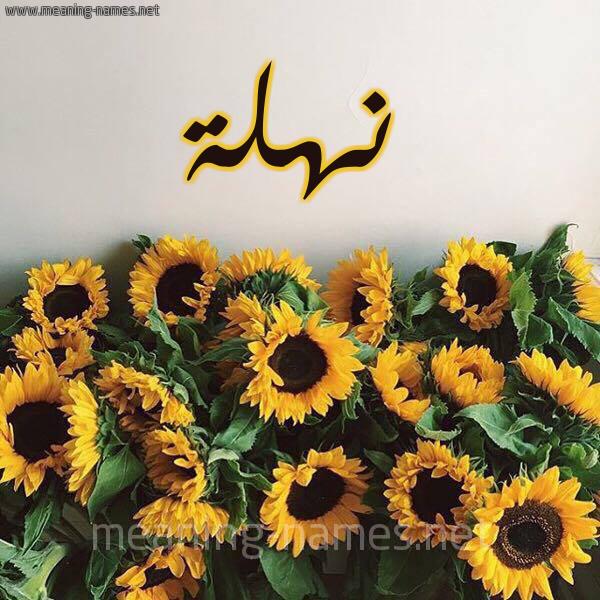 صورة اسم نهلة Nahla شكل 17 صوره دوار الشمس للإسم بخط رقعة