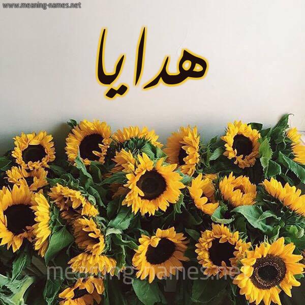 صورة اسم هدايا Hdaya شكل 17 صوره دوار الشمس للإسم بخط رقعة