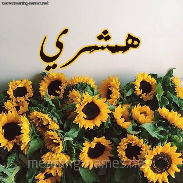 صورة اسم هَمْشَري HAMSHARI شكل 17 صوره دوار الشمس للإسم بخط رقعة