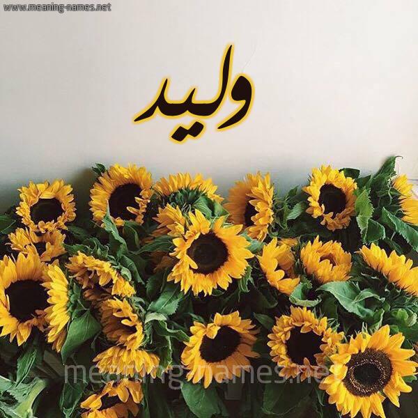 صورة اسم وليد Waleed شكل 17 صوره دوار الشمس للإسم بخط رقعة