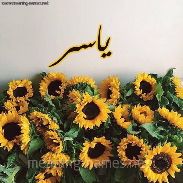 صورة اسم ياسر Yaser شكل 17 صوره دوار الشمس للإسم بخط رقعة