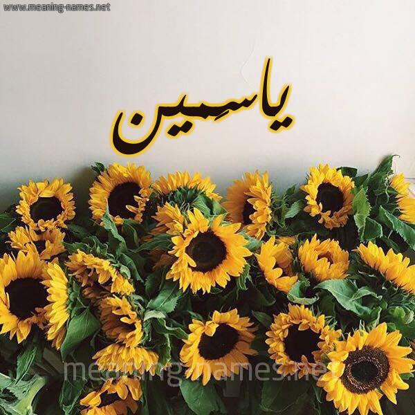 صورة اسم ياسَمين yasmen شكل 17 صوره دوار الشمس للإسم بخط رقعة