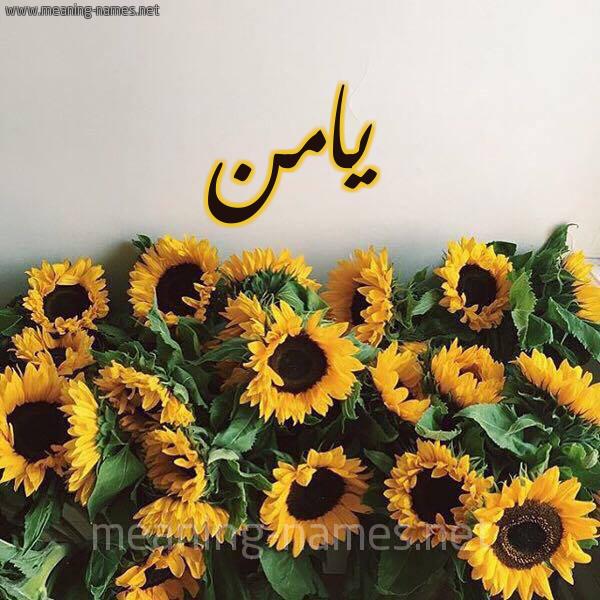 صورة اسم يامن Yamn شكل 17 صوره دوار الشمس للإسم بخط رقعة