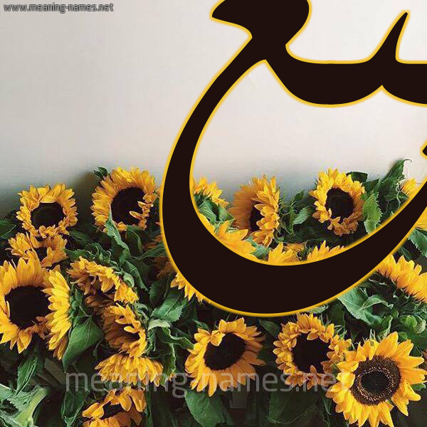 صورة اسم ينع Yn' شكل 17 صوره دوار الشمس للإسم بخط رقعة