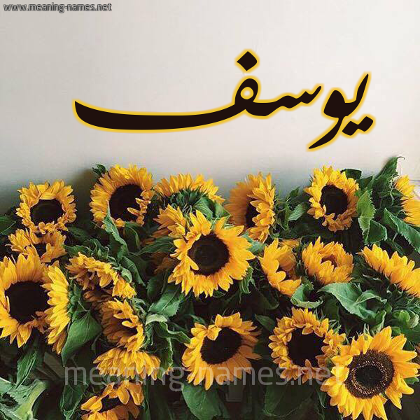 صورة اسم يوسف Yousef شكل 17 صوره دوار الشمس للإسم بخط رقعة