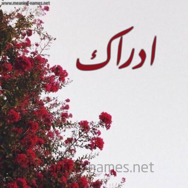 شكل 18 صوره الورد الأحمر للإسم بخط رقعة صورة اسم ادراك ADRAK