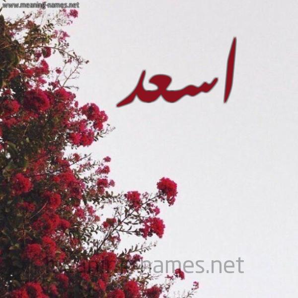 شكل 18 صوره الورد الأحمر للإسم بخط رقعة صورة اسم اسعد Asad