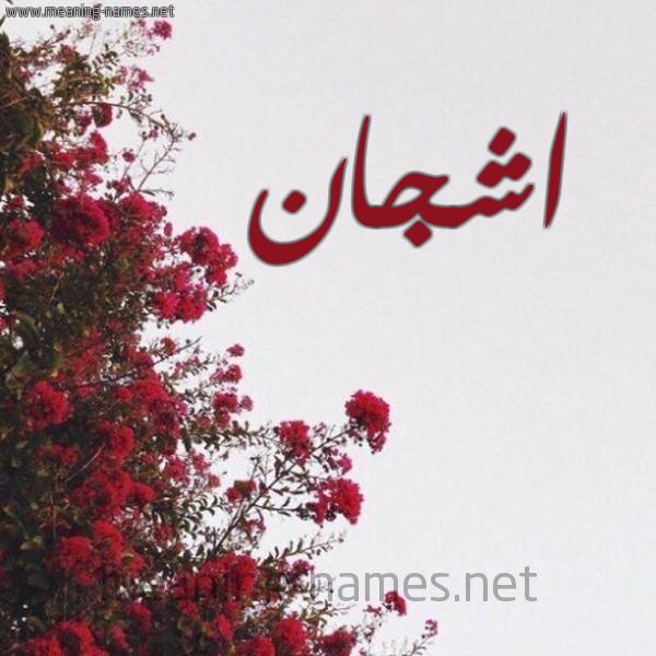 صورة اسم اشجان Ashgan شكل 18 صوره الورد الأحمر للإسم بخط رقعة