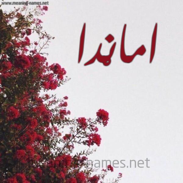 صورة اسم امانْدا Amanda شكل 18 صوره الورد الأحمر للإسم بخط رقعة
