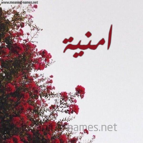 صورة اسم امنية Omnia شكل 18 صوره الورد الأحمر للإسم بخط رقعة
