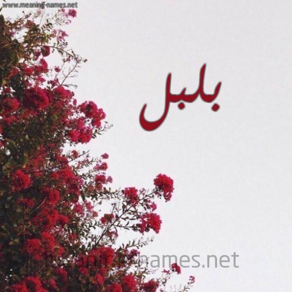 شكل 18 صوره الورد الأحمر للإسم بخط رقعة صورة اسم بلبل Blbl