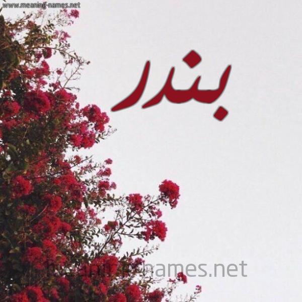 بندر شكل 18 صوره الورد الأحمر للإسم بخط رقعة كتابة على الورد 2021