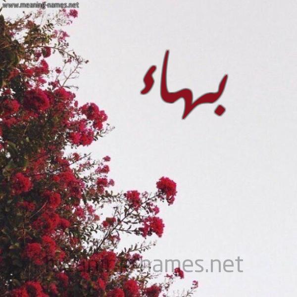 شكل 18 صوره الورد الأحمر للإسم بخط رقعة صورة اسم بهاء Bhaa