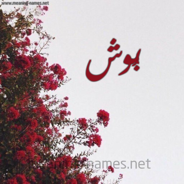 صورة اسم بُوش BOOSH شكل 18 صوره الورد الأحمر للإسم بخط رقعة