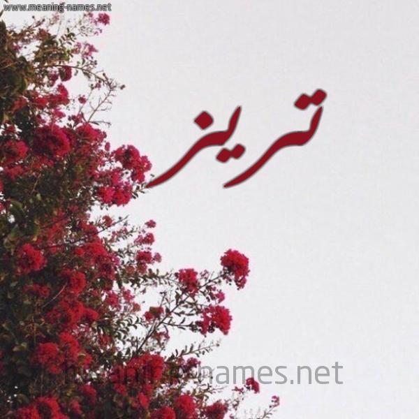 شكل 18 صوره الورد الأحمر للإسم بخط رقعة صورة اسم تريز Trez