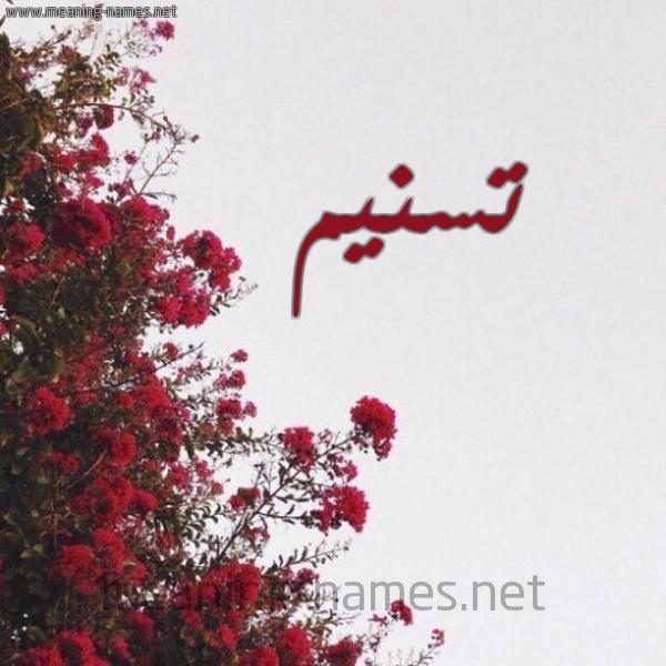 شكل 18 صوره الورد الأحمر للإسم بخط رقعة صورة اسم تسنيم Tsnym