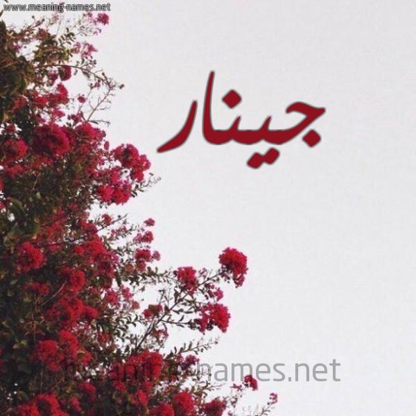 شكل 18 صوره الورد الأحمر للإسم بخط رقعة صورة اسم جينار Ginar