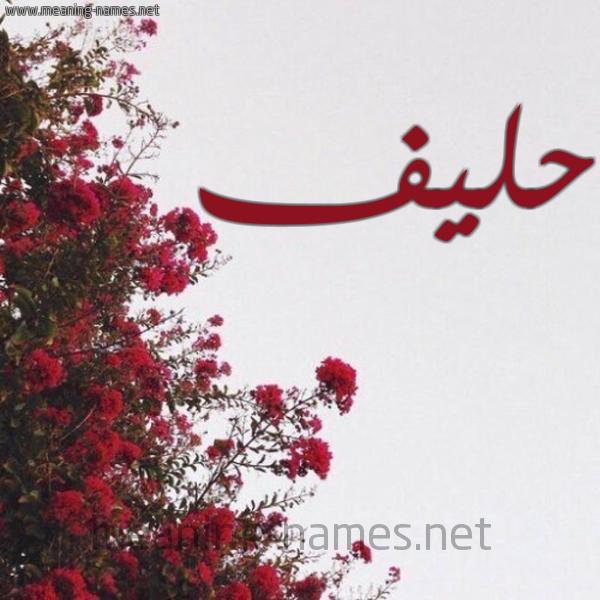 شكل 18 صوره الورد الأحمر للإسم بخط رقعة صورة اسم حليف HLIF