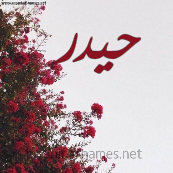 صورة اسم حيدر Hydr شكل 18 صوره الورد الأحمر للإسم بخط رقعة