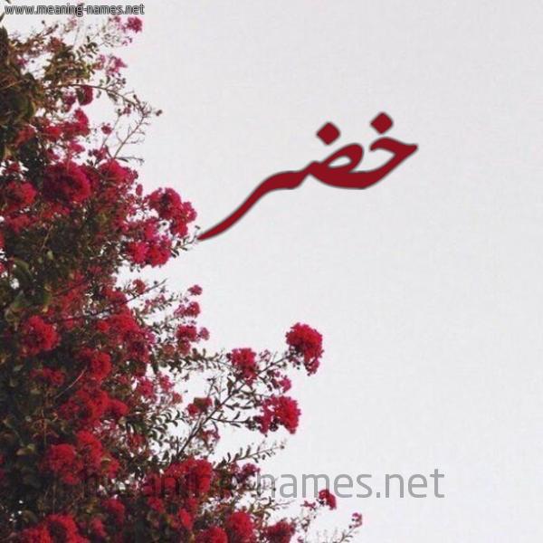 صورة اسم خضر Khedr شكل 18 صوره الورد الأحمر للإسم بخط رقعة