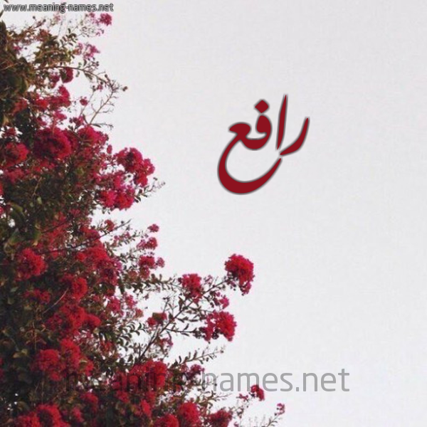 صورة اسم رافع Rafea شكل 18 صوره الورد الأحمر للإسم بخط رقعة