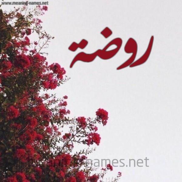 شكل 18 صوره الورد الأحمر للإسم بخط رقعة صورة اسم روضة Rowda