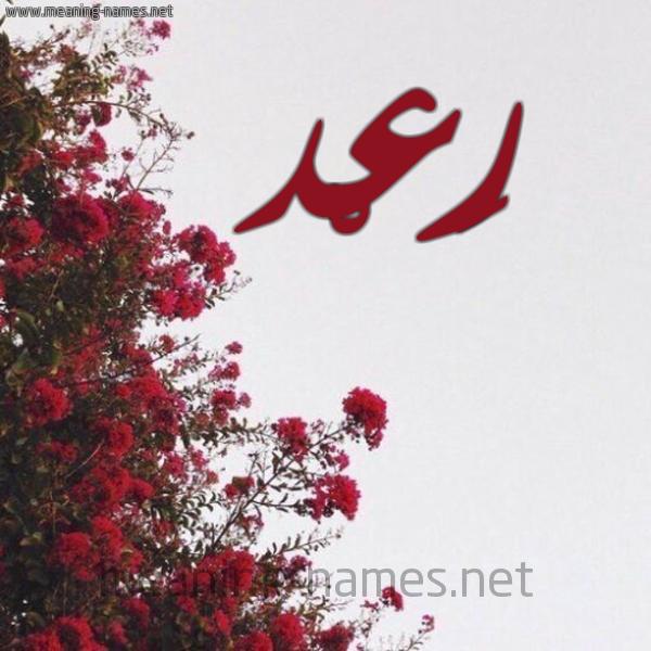 شكل 18 صوره الورد الأحمر للإسم بخط رقعة صورة اسم رَعْد RAAD